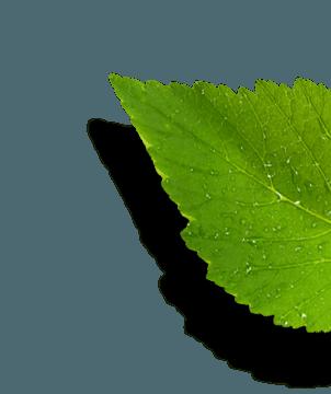 propiedades del ormus